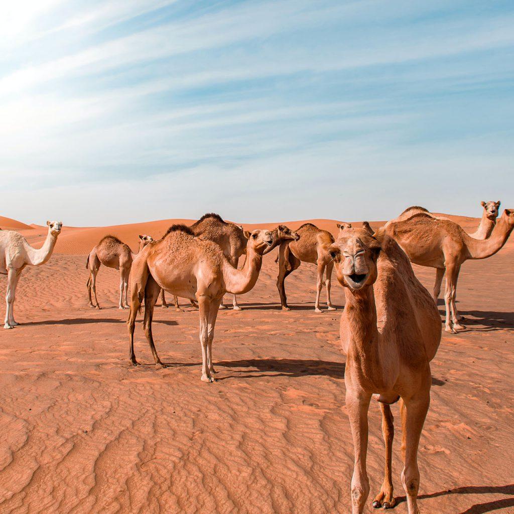 United Arab Emirates 02